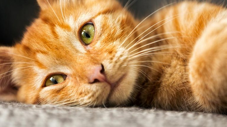 Orange Cat Names - 100 Pawesome Names for Your Ginger Kitty